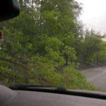 В Кирове ветер повалил деревья на дорогу