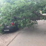 В Кирове дерево упало на припаркованную машину