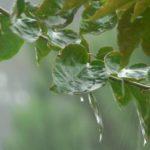 В Кировской области на неделе ожидается дождливая погода