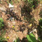 В Кирове на территории детского сада обнаружили гадюку