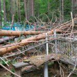 В Подосиновском районе ветер повалил десятки деревьев на кладбище