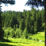 В Кировской области появятся пять новых особо охраняемых природных территорий