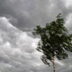 В Кировской области объявлено метеопредупреждение: ожидаются грозы и сильный ветер