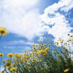 После жары к концу следующей недели жителей Кировской области ждет похолодание
