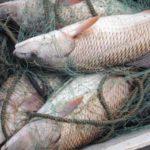 В Верхнекамском районе поймали браконьера с сетями: мужчине грозит штраф до 500 тыс рублей