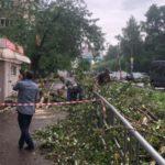 В Кирове упавшее дерево придавило мужчину