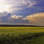 В выходные в Кировской области ожидаются грозы