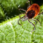 С начала сезона в Кировской области почти 15 тысяч человек пострадали от укусов клещей