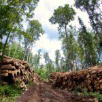 Завершено расследование дела по факту гибели рабочего на территории лесосеки Уржумского района