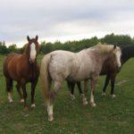 В Кирово-Чепецком районе мужчина похитил у фермеров трех лошадей