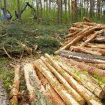 В Оричевском районе арендатор лесного участка компенсировал ущерб, причиненный в результате переруба деревьев