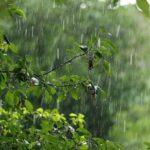 Жителей Кировской области ожидает дождливая и холодная неделя
