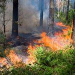 В Кировской области объявлено метеопредупреждение из-за высокой пожарной опасности