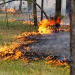 В Кировской области объявлен высокий уровень пожарной опасности