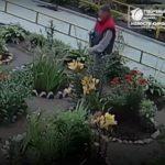В Кирове мужчина выкопал цветы с клумбы на улице для своей спутницы