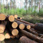 В Верхнекамском районе осуждённый лесоруб возместил причиненный ущерб в 500 тысяч рублей
