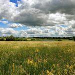 На следующей неделе в Кировской области ожидается потепление