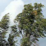 В Кировской области объявлено метеопредупреждение: ожидаются ливни и сильный ветер