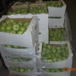 В Кирове снова уничтожили более 500 кг запрещённых к ввозу яблок и груш