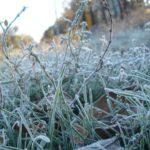 Гидрометцентр: В Кировской области ожидаются заморозки на почве до -1°С