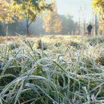 Гидрометцентр: В Кировской области ожидаются заморозки до -2°С