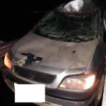 На трассе в Мурашинском районе водитель «Опеля» сбил лося
