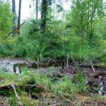 В Омутнинском районе спасли грибника, увязшего в болоте: мужчина провел в трясине несколько часов