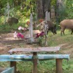 В Кировской области дикие кабаны атакуют село