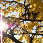 В Кировской области сохраняется влияние антициклона: ожидается малооблачная сухая погода