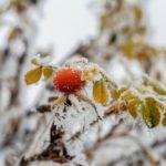 Синоптики: первый снег в Кировской области может выпасть на этой неделе