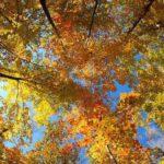 В Кировской области сохранится теплая погода без осадков
