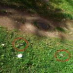 В Кирово-Чепецке жители обнаружили десятки мертвых птиц