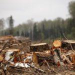В Верхнекамском районе возбуждено уголовное дело по факту незаконной рубки леса на сумму более 300 тысяч рублей
