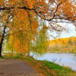 Синоптики рассказали, каким будет сентябрь в Кировской области