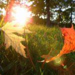 Синоптики рассказали, когда в Кировской области закончится бабье лето