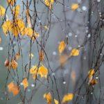 На неделе в Кировской области будет холодно, ожидается снег с дождем