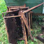 В Кировской области медведица разгромила пчелиную пасеку