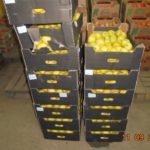 В Кирове уничтожили 876 кг яблок, груш и нектаринов