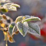 Несмотря на ожидаемое потепление, ночью в Кировской области сохранятся заморозки