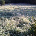 Жители Кировской области выкладывают в сети фото первых заморозков