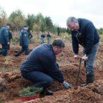 В Кировской области проходит всероссийская акция «Живи, лес!»