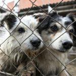 В России запретят убивать бездомных животных