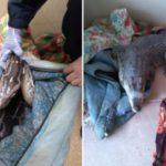 Крокодила и питона, которые выжили после жуткого ДТП под Вологдой, отдадут родным погибшего кировчанина