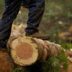 В Афанасьевском районе возбуждены три уголовных дела о незаконных рубках леса на сумму более 3 млн рублей