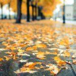 Синоптики рассказали, какая погода ждет жителей Кировской области в октябре