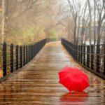 Жителей Кировской области ожидает дождливая неделя