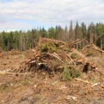 В Верхнекамском районе предприятие заставили ликвидировать 4 свалки