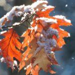Синоптики рассказали, когда в Кировской области выпадет первый снег