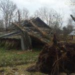 В Кировской области тополь рухнул на жилой дом