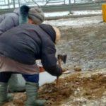 В Кирове пенсионерки с топорами вышли на борьбу с гололедом на тротуарах